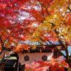 【京都紅葉情報】永観堂の紅葉・見頃やアクセス情報   ぽけっと京都-お手軽にパッと読